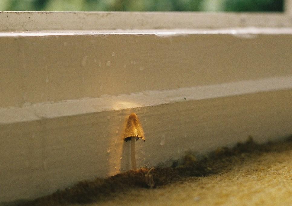 Methods of Mycelia