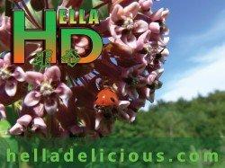 Vote for Hella Delicious Recipe Videos!
