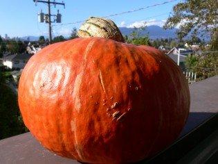 The Generous Pumpkin