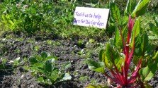History & Resources – On Guerrilla Gardening