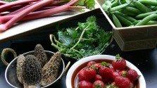 NZ: Food Bill Threatens Food Freedom