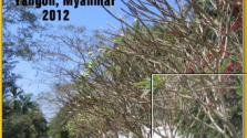 2012 Calendar – Daily Life Yangon, Myanmar