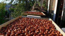 Raw almonds must be treated, federal judge rules