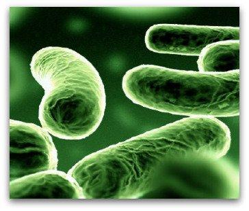 Probiotics help digestion