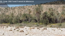 Ancient Food Forests: Morocco and Vietnam