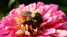 Sense of Adventure in Man and Bee Influenced by Neurotransmitters