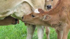 Four Common Anti-Raw Milk Strategies