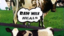 """Flawed Study Used as Basis for CDC's Report on """"Dangers"""" of Raw Milk"""