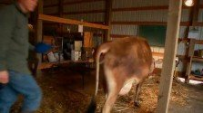 One Farmers Perspective on the Raw Milk Debate