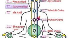Ayurdedic Methods to Cleanse Toxic Electromagnetic Frequencies