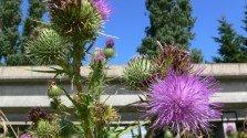 Cedar Cottage Community Garden