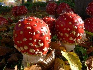 Santa Claus and the Magic Mushrooms
