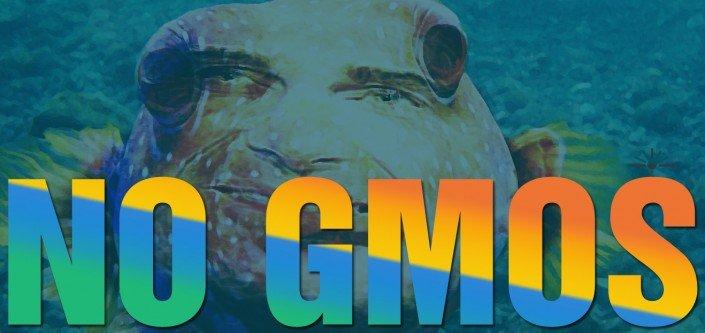noGMO-fish