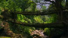 Practical Tree Sculpting — Living Bridges by the War-Khasis of India