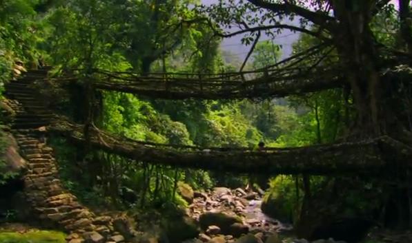 meghalaya-living-bridge