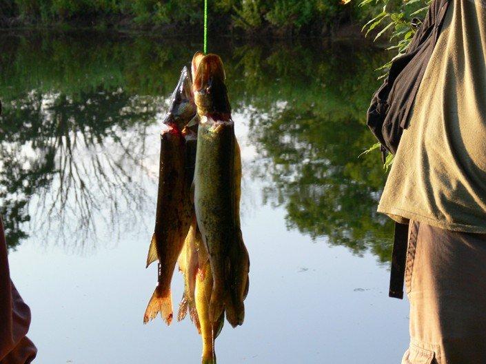 MSJ-fishing6