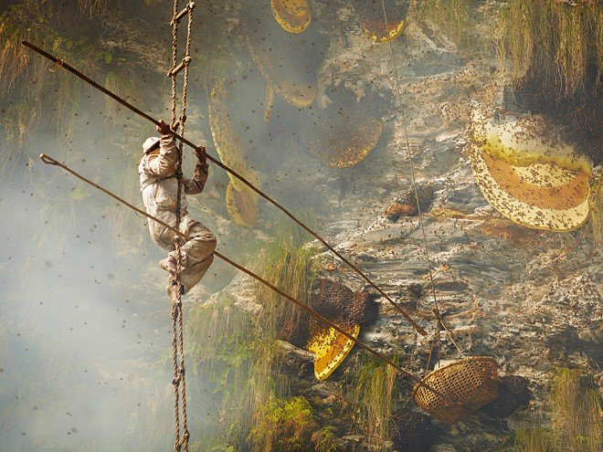 Honey Hunters of Nepal. More photos by Andrew Newey if you click on the image.