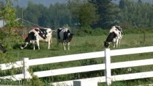Raw Milk Could be Legal in Canada with your Support