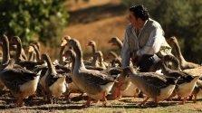 Dan Barber – Natural Fois Gras